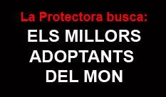http://www.protectorasabadell.org/condiciones.php
