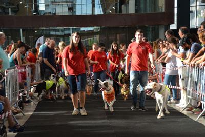 1ª Feria Animalista en Sabadell