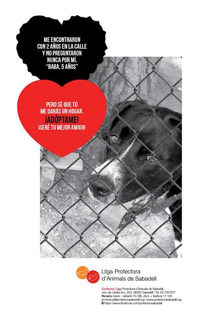 1ª Campaña: Una ventana para nuestros perros invisibles