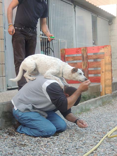 Colaboració amb Alperroverde - gossos a les presons