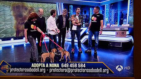 Participem al programa El Hormiguero de Antena 3