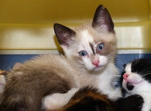 Agosto: Mes del gatito
