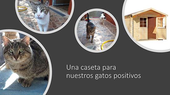 Caseta gatos