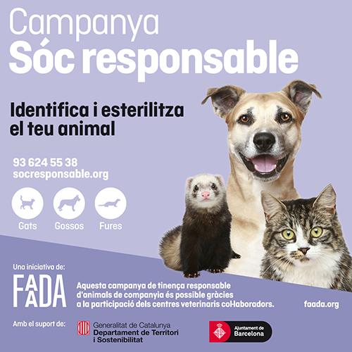 Faada 2019 cat