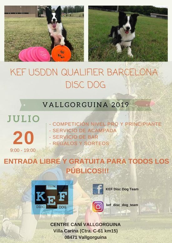 Campeonato Disc Dog