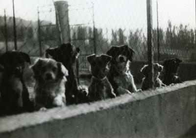 1983 5