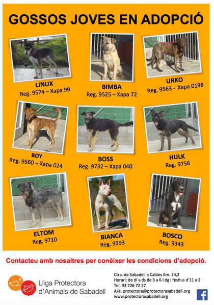 gossos joves 5-15