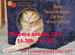 22.9. Chillcat
