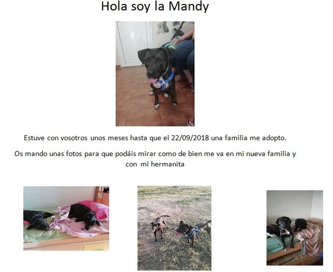 mandy119