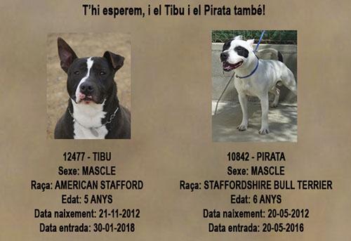 Tibu y Pirata